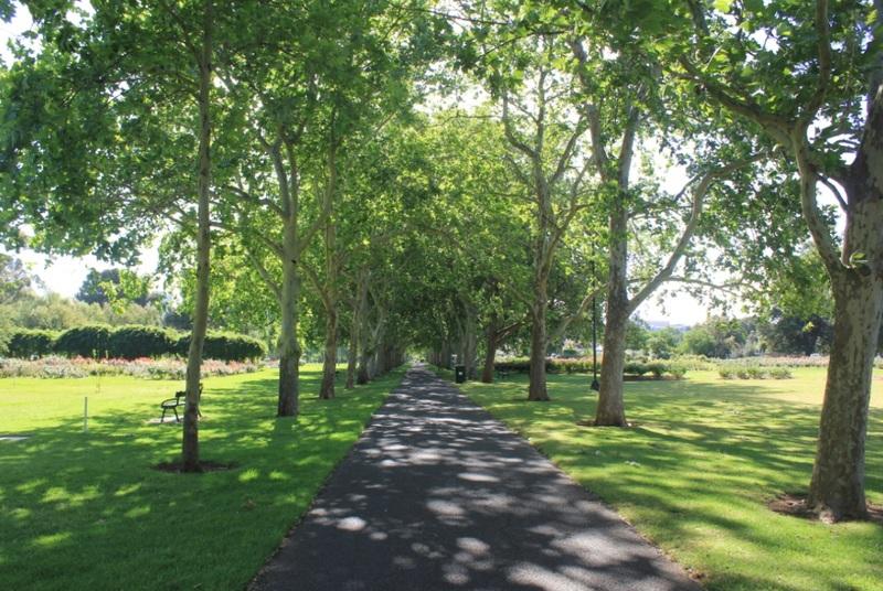 Rymill Park, 2014