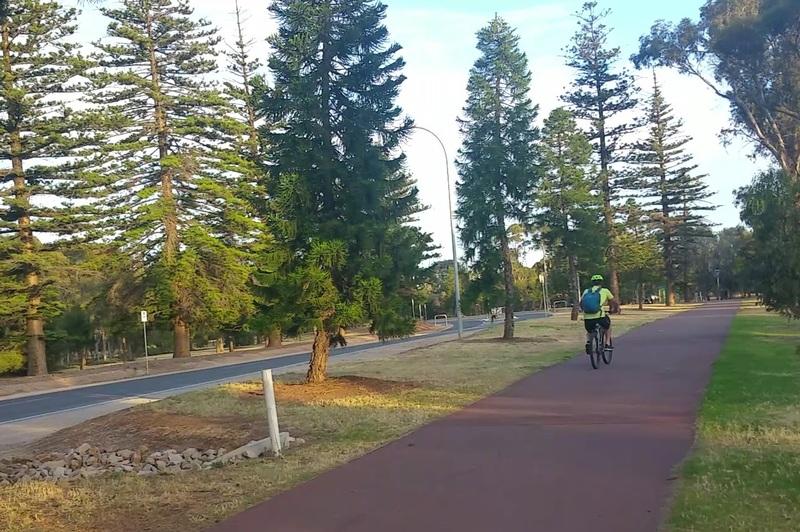 Norfolk Island pines on Lefevre Rd